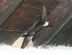 Vogel Gegen Scheibe Geflogen Lebt Noch