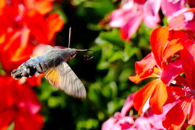 Schmetterling Spiele Kostenlos Online